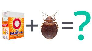Bed Bug FAQ: Can Baking Soda Kill Bed Bugs? - YouTube