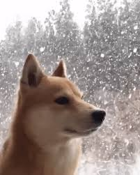 doge snow gif. Perfect Doge Awesome Doge Chillin In The Snow Doge Dog Shiba Gif Adorable Inside Gif