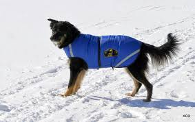winter coats dogs 3