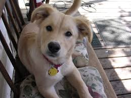 27 cutest dog breeds in the world peta2 1 curious cookiesandcreamador