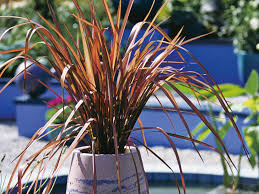 drought resistant garden. Drought Resistant New Zealand Flax Garden