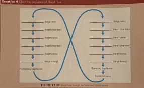 Blood Flow Figure 8 Chart Diagram Quizlet