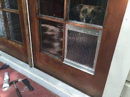 diy cat door for window cat door for french door fresh dog door for french door diy cat door for window