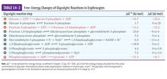 Glycolysis Chart With Enzymes Which Steps Are Most Critical In Driving Glycolysis Foward