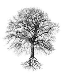 Bildergebnis für Wachstumsbaum