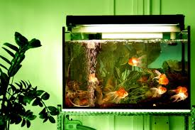 Fun Fish Tank Decorations Why Do My Fish Hide All The Time