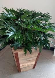 modern office plants. Pots2 Modern Office Plants I