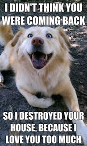 Overly Attached Dog memes | quickmeme via Relatably.com