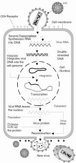 The Basics Of Immunology An Introductory Unit For High