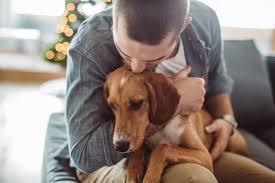 Canine Lymphoma Symptoms Canine Lymphoma Symptoms