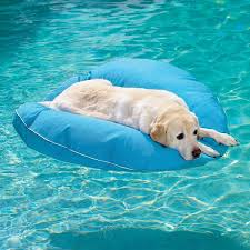 Floating On Water Dog floating on the water