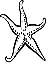 Small Picture Starfish Coloring Book Coloring Coloring Pages