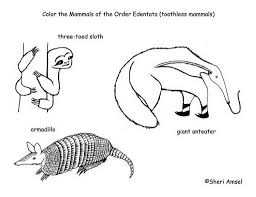 Small Picture Emejing Armadillo Coloring Pages Print Ideas New Printable