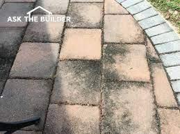 patio mold mildew prevention mold