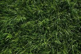 grass blade texture. 2,000+ Free Grass Textures For Your Designs Blade Texture