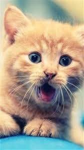 cute cat wallpaper iphone. Perfect Iphone 7532 64 Cute Cat IPhone 5scse Wallpaper For Wallpaper Iphone L