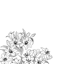 tumblr transparents black and white flowers. Beautiful Tumblr I Love Films Art Food And Travelling The World For Tumblr Transparents Black And White Flowers W