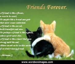 Quotes In Spanish About Friendship Gorgeous Quotes About Friendship In Spanish Brilliant On Spanish Cute Quotes