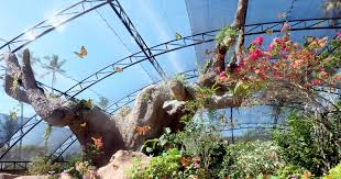 balitopia erfly park admission