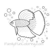 Small Picture Fish Coloring Pages FamilyFunColoring