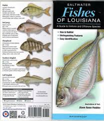 Chesapeake Bay Fish Identification Chart Fish Identification Guides Reef Fish Identification Guides