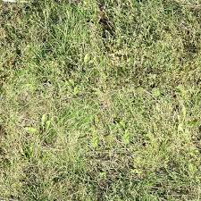 wild grass texture. Unique Texture Tileable Grass Texture Throughout Wild N