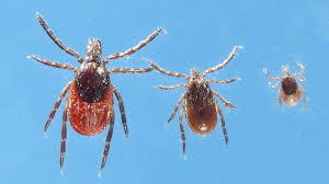 'big Diseases Viruses Is Of Tick Cdc 7 There Warns About Really A Epidemic' New