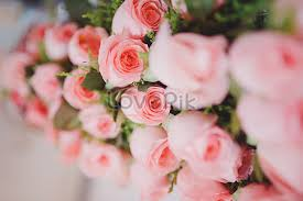 beautiful flowers images flower