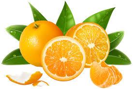 orange clipart png. pin orange (fruit) clipart mandarin #15 png t