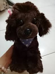 soft toy toy poodle