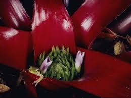 amazon rainforest endangered plants. Modren Amazon Inside Amazon Rainforest Endangered Plants O