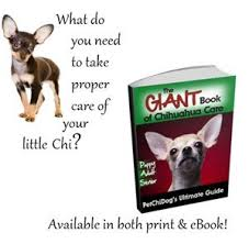 Chihuahua Age Milestones For The Puppy Adult And Senior
