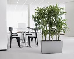 modern office plants. Office Plants Modern R