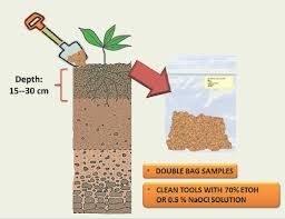 Schematic Representation Of The Soil Sampling Strategy