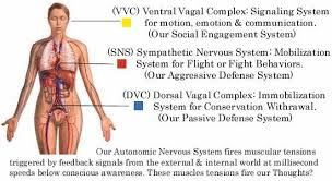 Polyvagal Theory Chart Insights And Take Aways From The Polyvagal Theory For Trauma