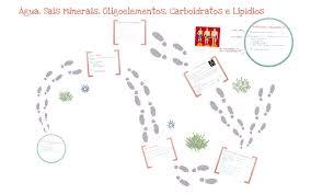 biologia noções de metabolismo Água