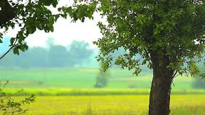 nature photo background. Fine Nature Plants For Natural Background Nature Stock Footage Video 100  Royaltyfree 6963856  Shutterstock And Photo Background U