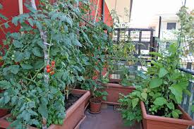 container garden on balcony to grow vegetables