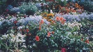 Small Picture Best Tumblr Flower Garden 33 On Online Design Interior With Tumblr