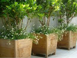 Patio Pots and Planters Luxury for Best 25 Large Outdoor Planters Ideas On  Pinterest Planter Ideas