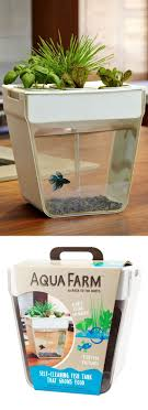 Self Cleaning Fish Tank Garden Best 20 Fish Tank Terrarium Ideas On Pinterest Amazing Fish