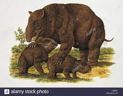 Palaeozoology - Pleistocene - Diprotodon (art work by Philip Hood Stock  Photo - Alamy