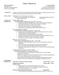 Download Examples Of Great Resumes