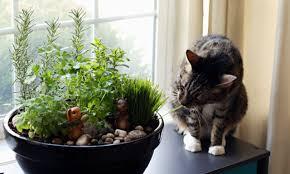 how to make an amazing diy indoor cat garden