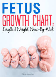 Pregnancy Growth Week By Week Chart Pin On And The Dream Came True