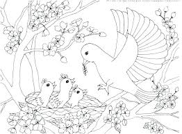 Printable Bird Coloring Pages Angry Birds Coloring Page Robin Bird