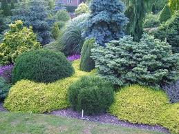 Small Picture Best 25 Evergreen garden ideas on Pinterest Evergreen landscape