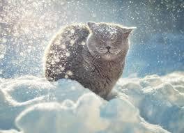 Risultati immagini per neve felicità