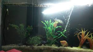 Home fish tanks