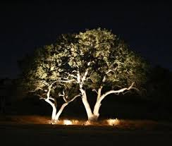 landscape lighting trees. tree lighting by outdoor perspectives of san antonio landscape trees i